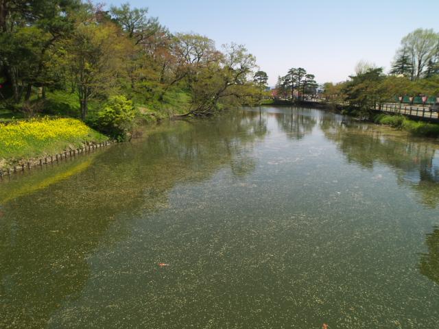 故郷の風景 高田公園のお堀_f0024992_853111.jpg