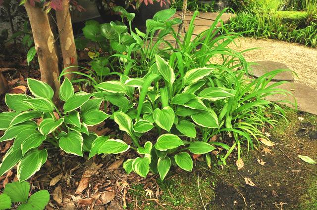 植物界のあかり_f0017413_7483924.jpg