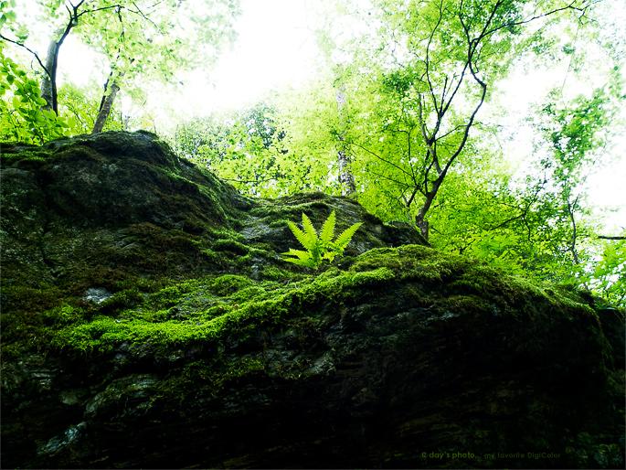 Green Breath_e0117517_19253030.jpg