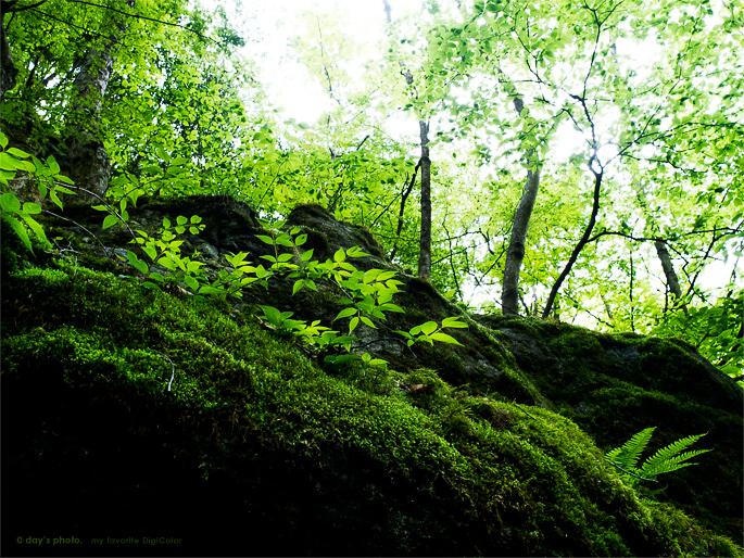 Green Breath_e0117517_19254820.jpg