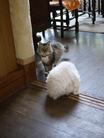 猫のお友だち ハナちゃんセトラちゃんエムくんチコちゃんライオンちゃんモコちゃんハルちゃんクロくん編。_a0143140_0152430.jpg