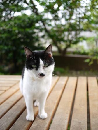 猫のお友だち ハナちゃんセトラちゃんガクくんハルちゃんメイちゃん編。_a0143140_20562720.jpg