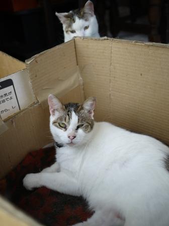 猫のお友だち ハナちゃんセトラちゃんガクくんハルちゃんメイちゃん編。_a0143140_2133187.jpg