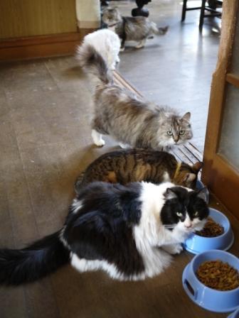猫のお友だち ハナちゃんセトラちゃんガクくんハルちゃんメイちゃん編。_a0143140_2141674.jpg