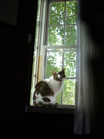 猫のお友だち ハナちゃんセトラちゃんガクくんハルちゃんメイちゃん編。_a0143140_2172942.jpg