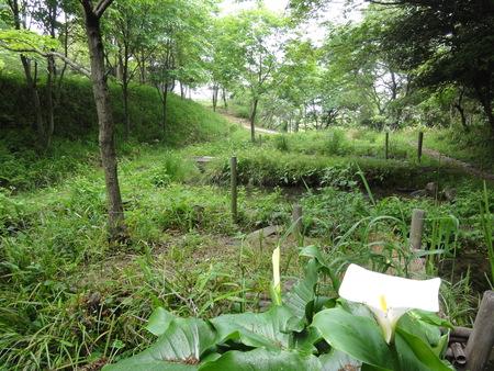 ゴーヤでグリーンカーテン   by  (TATE-misaki)_c0108460_21382492.jpg