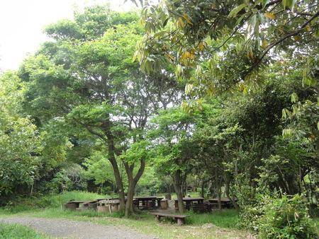 ゴーヤでグリーンカーテン   by  (TATE-misaki)_c0108460_21401647.jpg