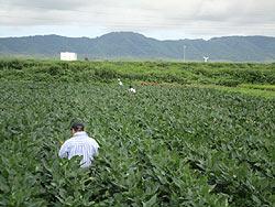 各農家へのホームステイ(農作業実習)_a0208976_1623489.jpg