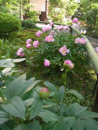 皐月の庭から_e0251278_7404323.jpg
