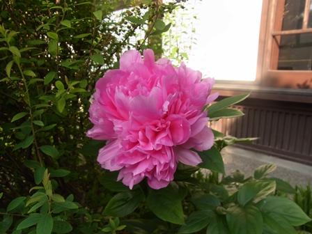 皐月の庭から_e0251278_7404720.jpg