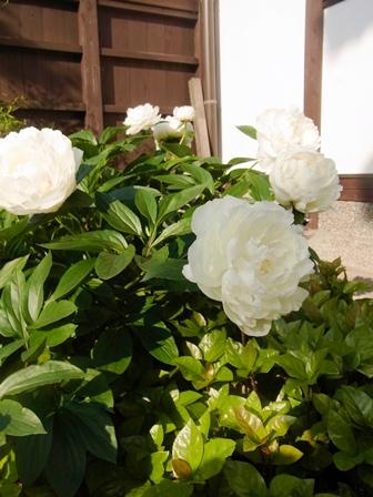 皐月の庭から_e0251278_7481098.jpg