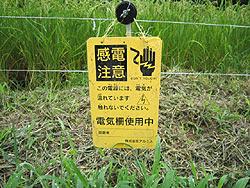 8月25日の田んぼ(月光原小・西根小)_d0247484_212811.jpg