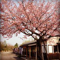 春がきたよ、全員集合!ムギコヤ・ガレージセール!!_d0028589_22425233.jpg