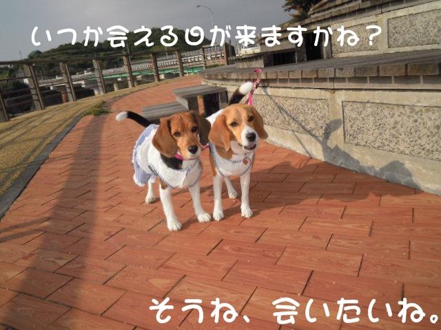 c0166622_727108.jpg