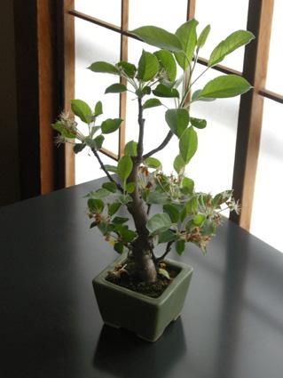 世田谷の花展覧会 続き_f0001829_1211899.jpg