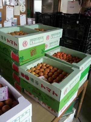 高知県まで『フルーツトマト』・・・視察へ行ってきました♪_b0077531_14104583.jpg