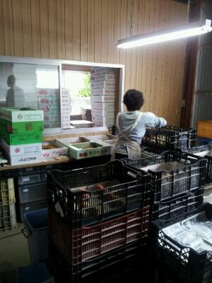高知県まで『フルーツトマト』・・・視察へ行ってきました♪_b0077531_14111295.jpg