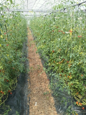 高知県まで『フルーツトマト』・・・視察へ行ってきました♪_b0077531_1411548.jpg