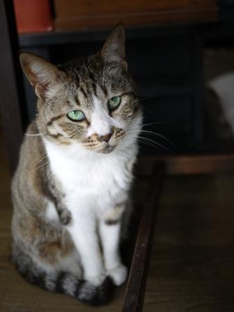 猫のお友だち ハナちゃんチコちゃんモコちゃんダイヤちゃんクラブちゃん編。_a0143140_23133671.jpg