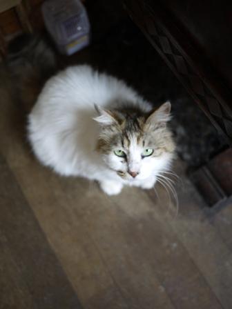 猫のお友だち ハナちゃんチコちゃんモコちゃんダイヤちゃんクラブちゃん編。_a0143140_23153822.jpg