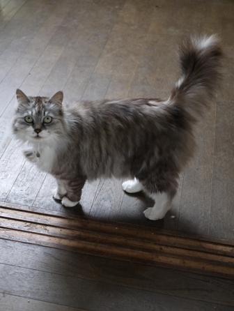 猫のお友だち ハナちゃんチコちゃんモコちゃんダイヤちゃんクラブちゃん編。_a0143140_2318342.jpg