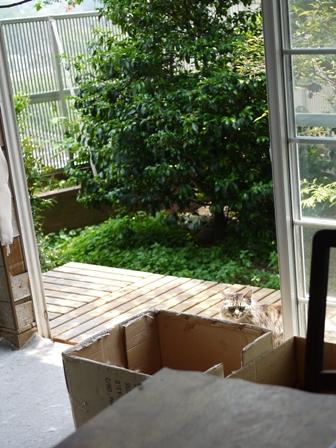 猫のお友だち ハナちゃんチコちゃんモコちゃんダイヤちゃんクラブちゃん編。_a0143140_23184291.jpg