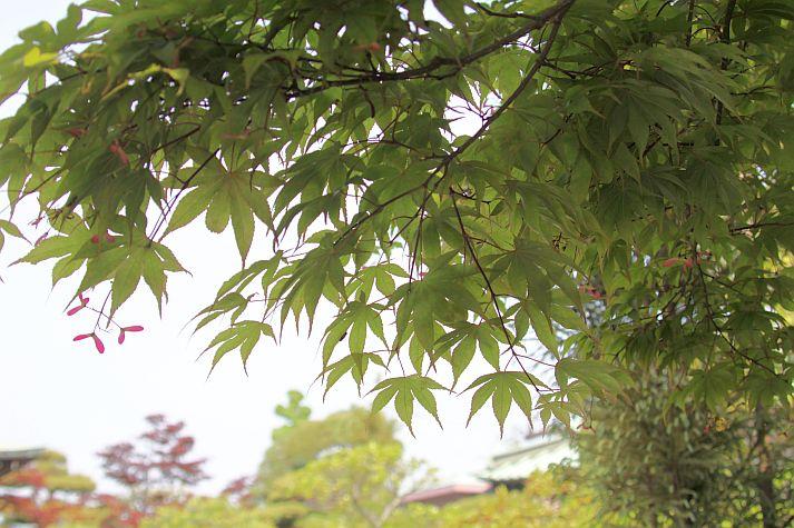 花祭りコンサート より_e0173350_0365143.jpg