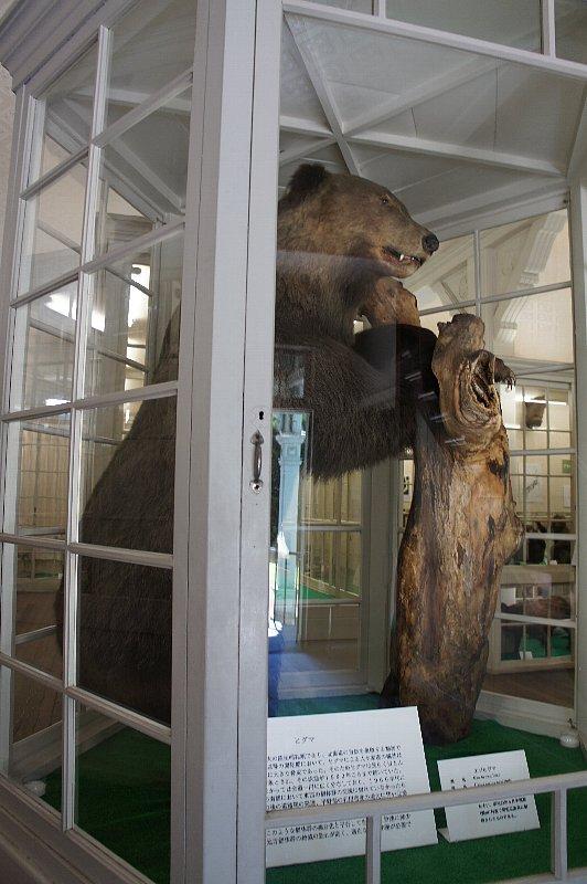 北海道大学農学部植物園 博物館本館_c0112559_13144822.jpg