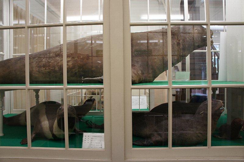 北海道大学農学部植物園 博物館本館_c0112559_13154329.jpg
