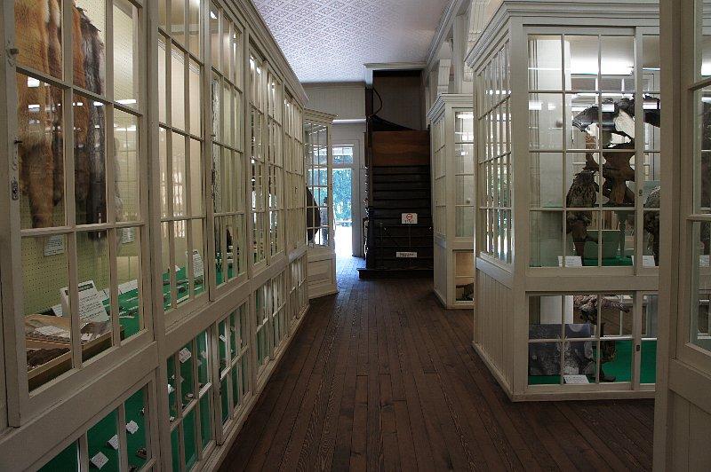 北海道大学農学部植物園 博物館本館_c0112559_131624.jpg