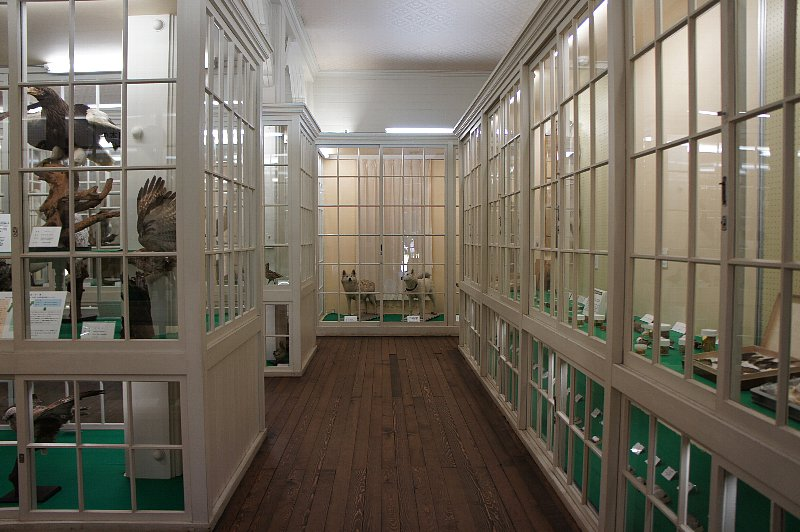 北海道大学農学部植物園 博物館本館_c0112559_1316986.jpg