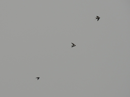 f0216489_19521691.jpg