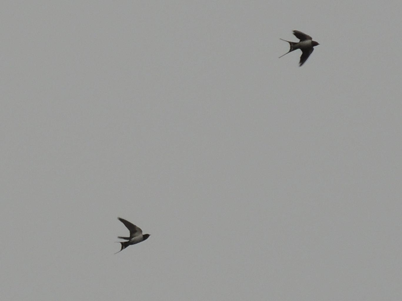 f0216489_19524016.jpg