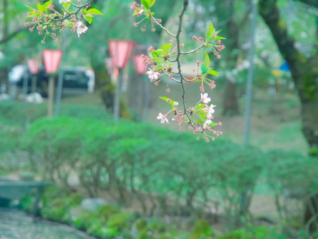 故郷の風景 高田公園の桜_f0024992_836398.jpg