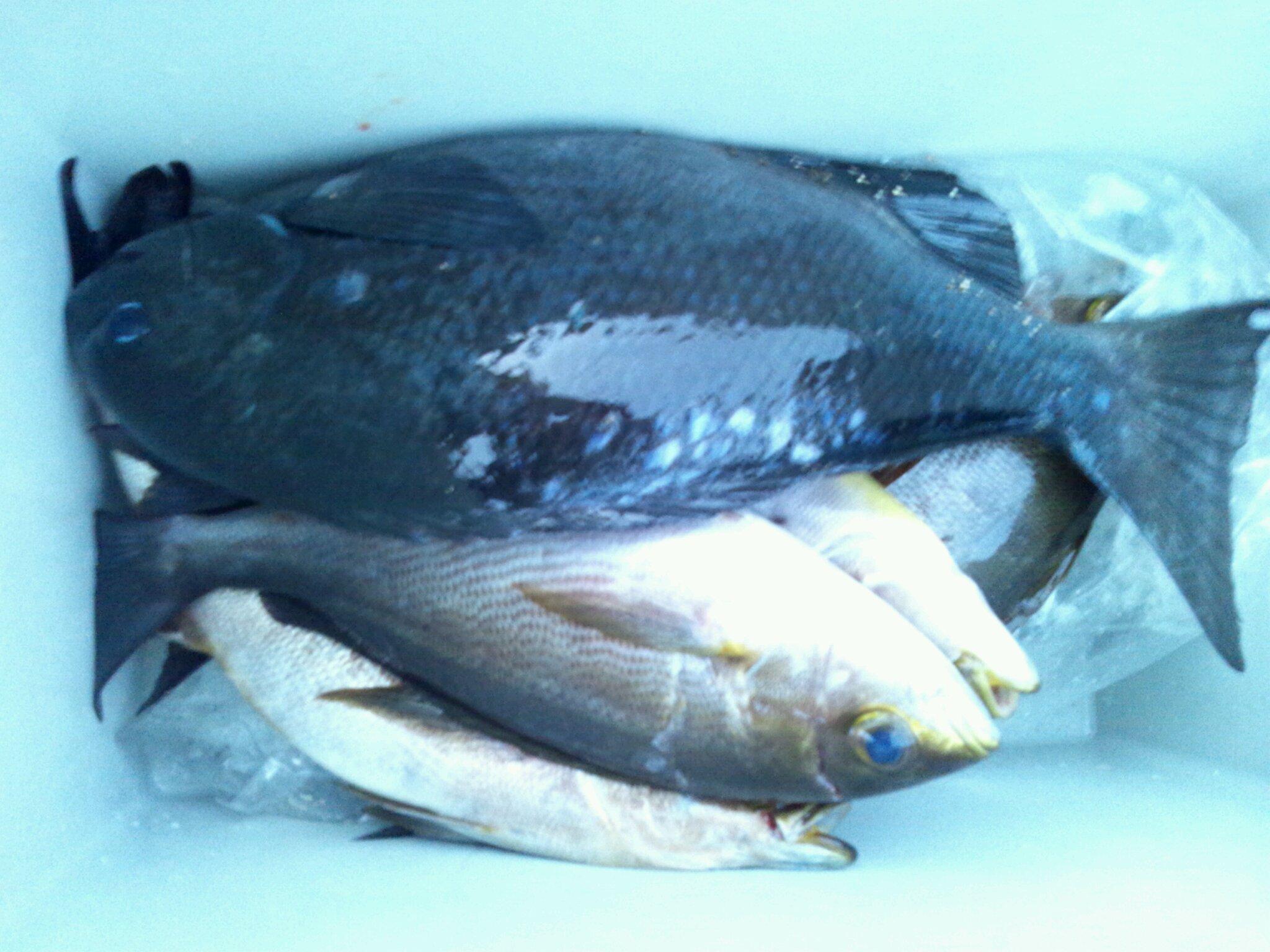 6日午後から絶好調!水島一番入食い!!!!!!_d0114397_10552326.jpg