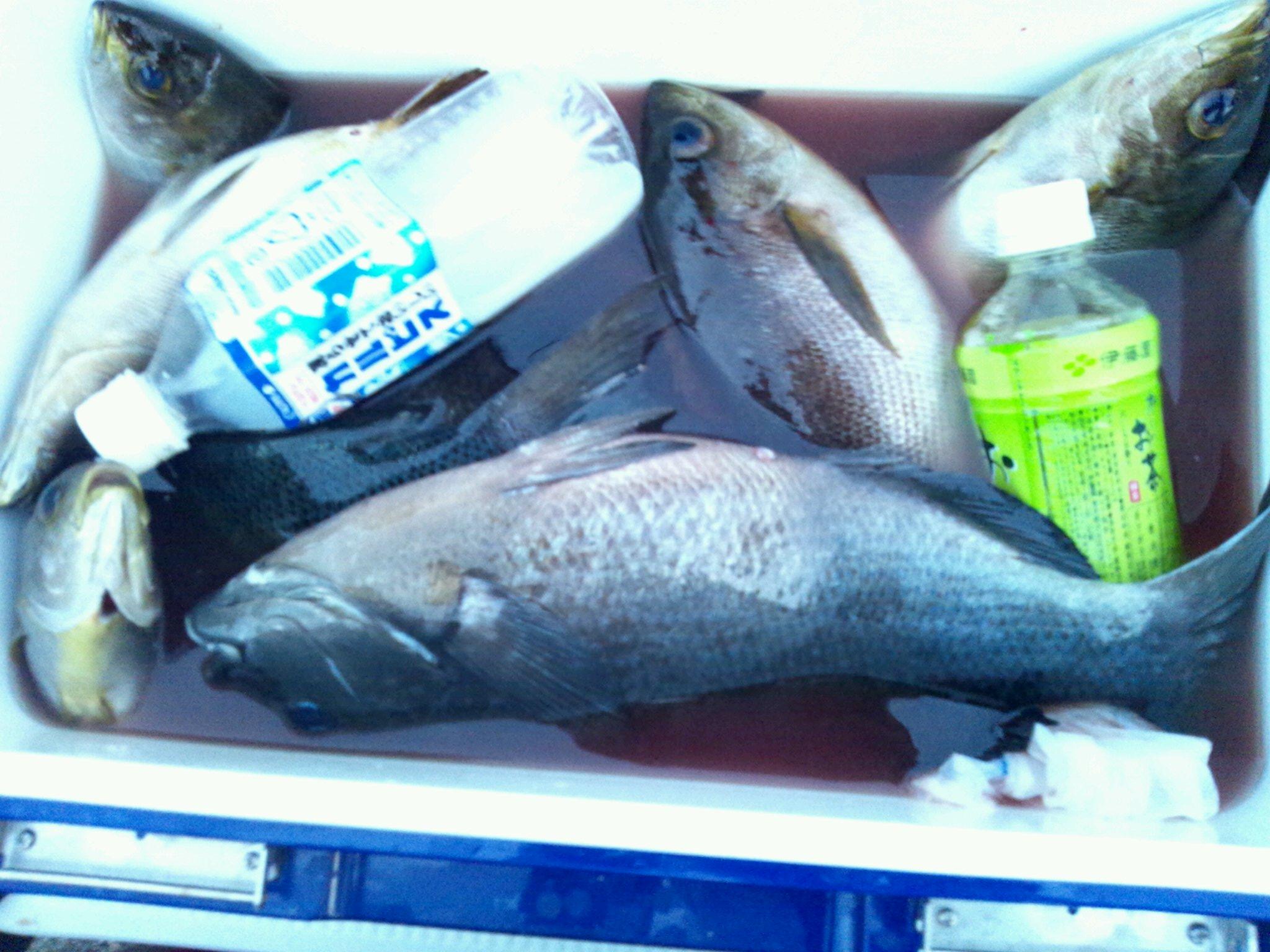 6日午後から絶好調!水島一番入食い!!!!!!_d0114397_1055352.jpg