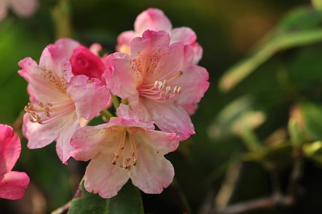 トキ色の花束_f0017413_1727944.jpg
