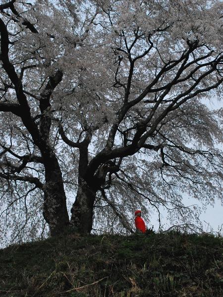 発地の桜2012_c0177814_12105556.jpg