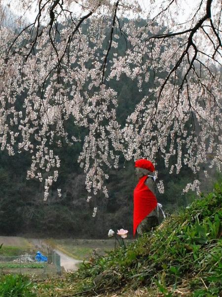 発地の桜2012_c0177814_12111599.jpg