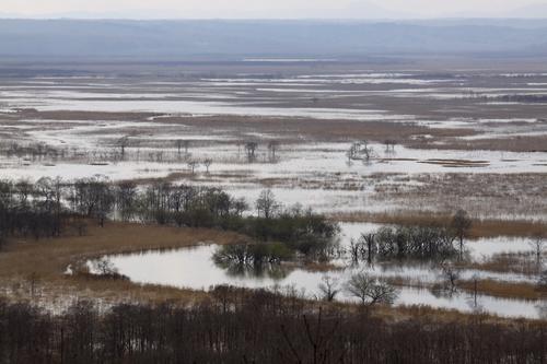 あふれる湿原  5月11日_f0113639_1105524.jpg