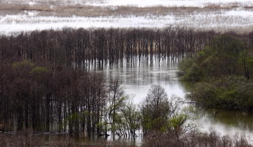 あふれる湿原  5月11日_f0113639_11103324.jpg