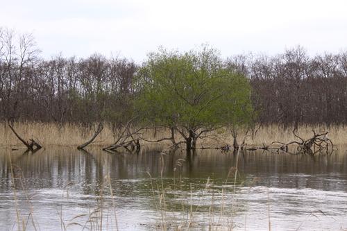 あふれる湿原  5月11日_f0113639_1143087.jpg