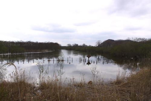 あふれる湿原  5月11日_f0113639_1154294.jpg