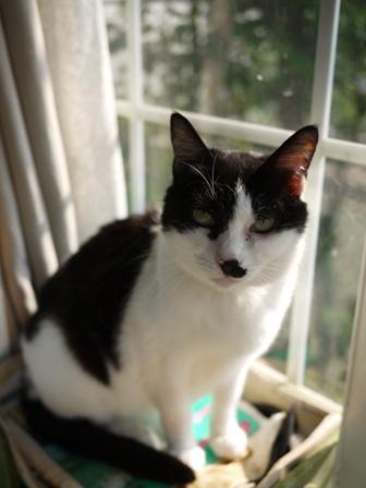 猫のお友だち ハナちゃんホビちゃんライオンちゃんシロちゃん編。_a0143140_2223543.jpg