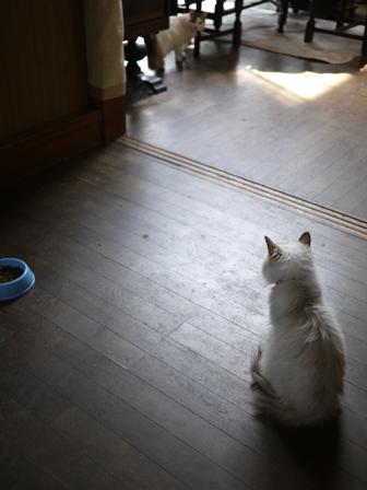 猫のお友だち ハナちゃんホビちゃんライオンちゃんシロちゃん編。_a0143140_22241273.jpg
