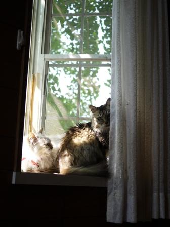 猫のお友だち ハナちゃんホビちゃんライオンちゃんシロちゃん編。_a0143140_22251950.jpg