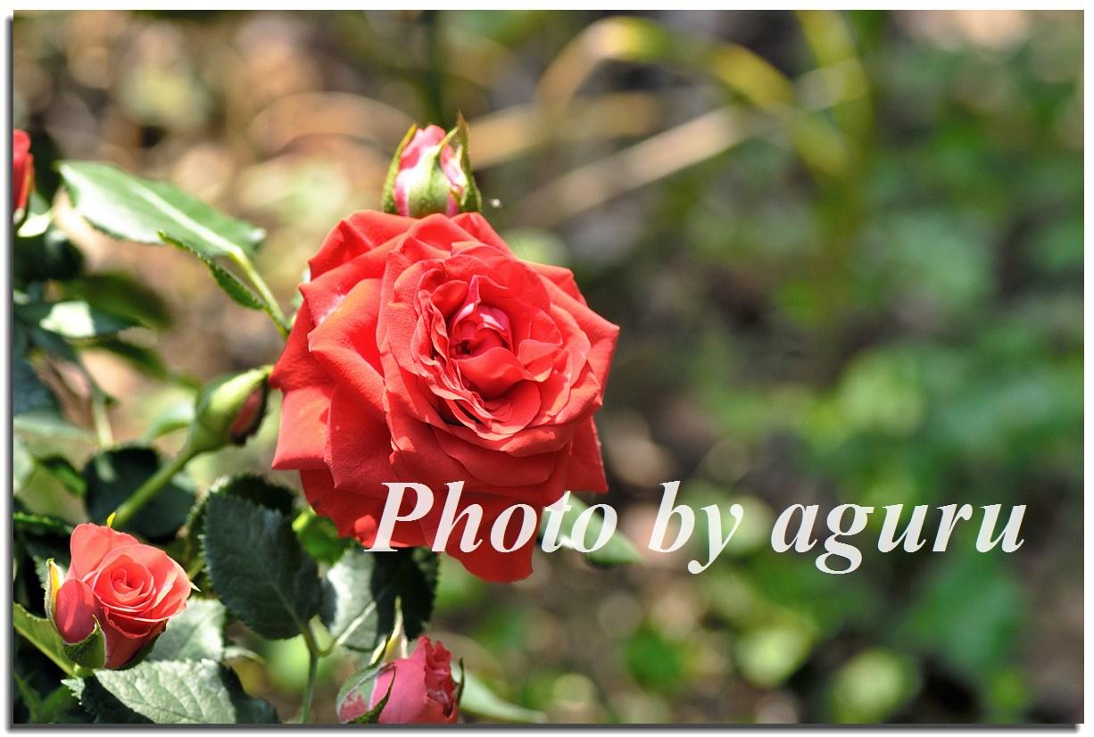 f0160241_18341199.jpg