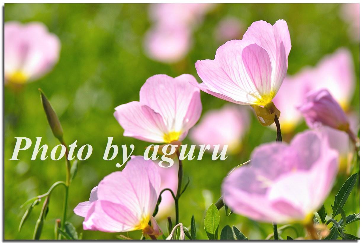 f0160241_1834428.jpg