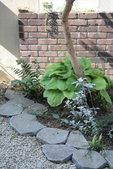 ざっくりと庭の様子_e0184445_9413549.jpg