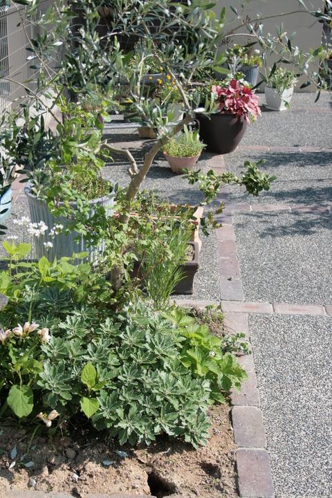 ざっくりと庭の様子_e0184445_9441325.jpg